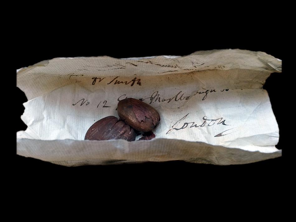 Nickle at Noon – Maria Zytaruk:  Artifacts of Biodiversity