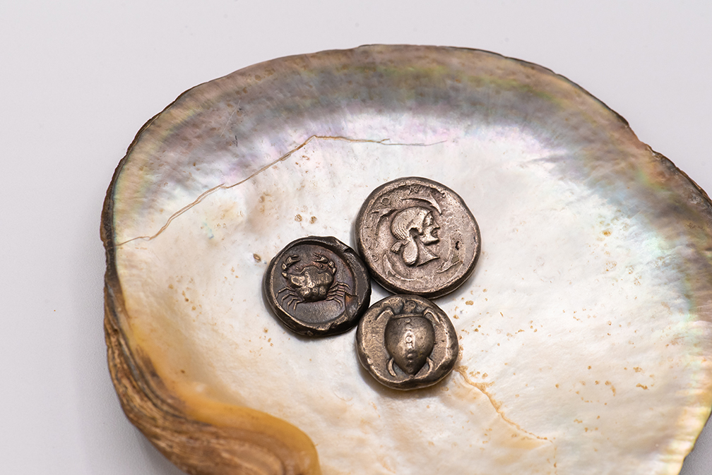 Pearl shell with three ancient Greek coins from the Collection of Nickle Galleries. Photo: Brittany DeMone.